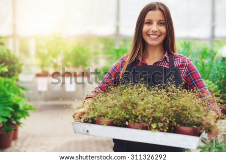 Smiling woman working in a commercial nursery selling plants to the public standing holding a tray of potted houseplants in her hands as she smiles at the camera - stock photo