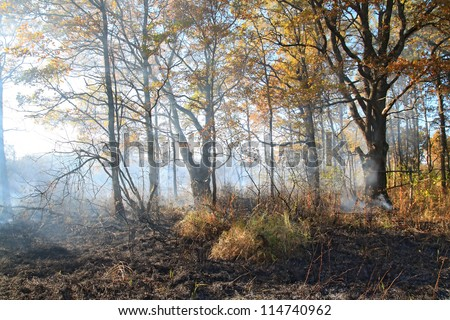 smoke after fire in oak wood - stock photo