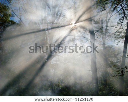 Smoke from a forest fire rises through the trees in a forest. Sunlight filters through the haze. - stock photo