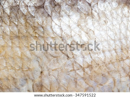 smoked fish skin as a background