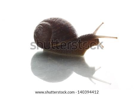 Snail Against the Light - stock photo