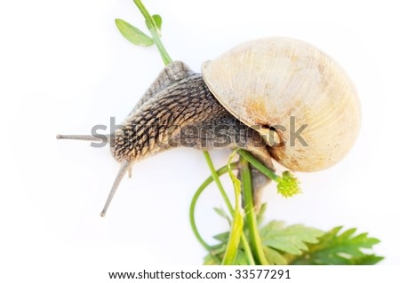 snail and flora against white background.