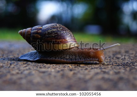 Snail crawling across the ground - stock photo