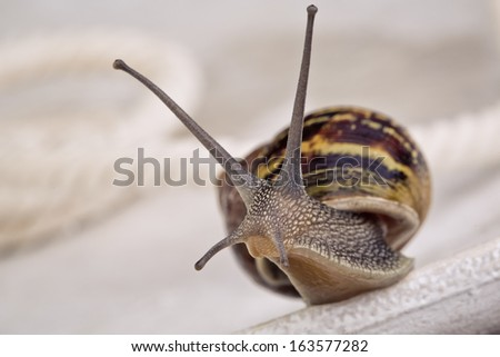 Snail crawling on table, looking around curiously - stock photo