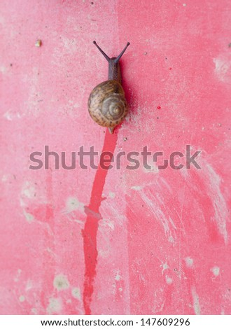 snail crawling up on the red board - stock photo