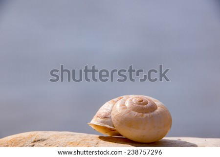 snail house at the beach  - stock photo