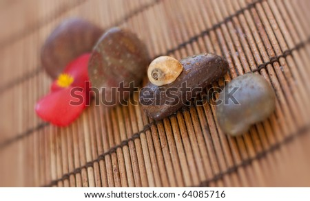 Snail house on the stone. Shallow depth of field. - stock photo