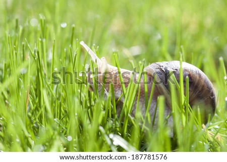 Snail in green grass - stock photo