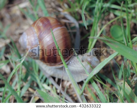 Snail in the field macro close up view