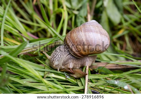 snail in the garden on the grass - stock photo
