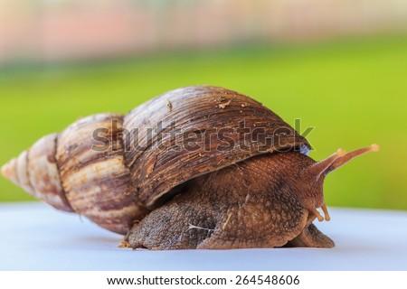 snail in the garden on white floor - stock photo