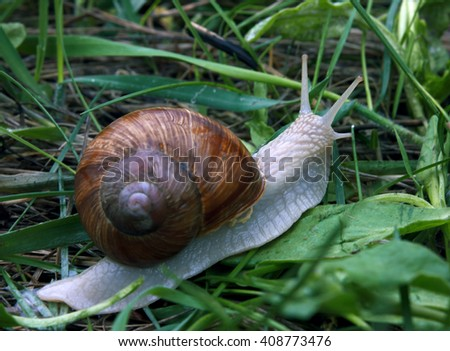 Snail in the green grass after the rain - stock photo