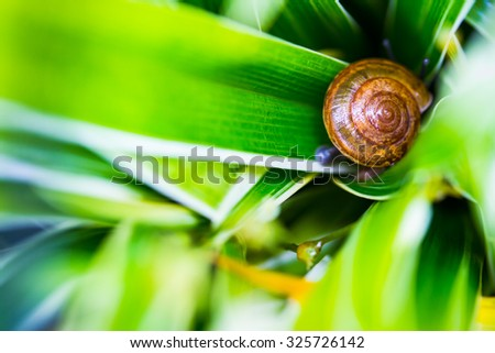 Snail in the green leafs