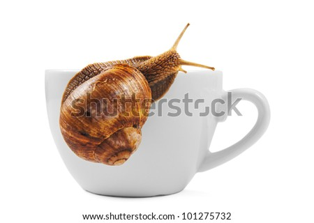 snail is climbing the cup - stock photo