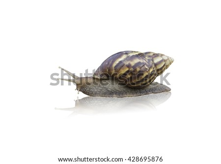 snail isolate on white background