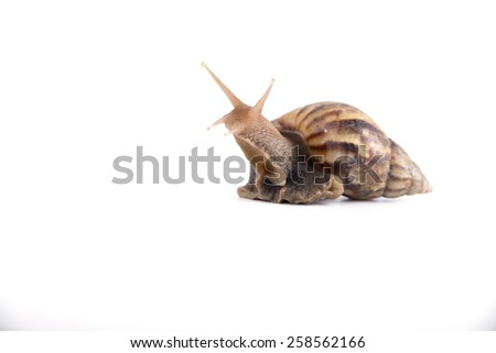 snail isolated on a white background