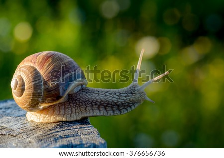 Snail looking for path in garden