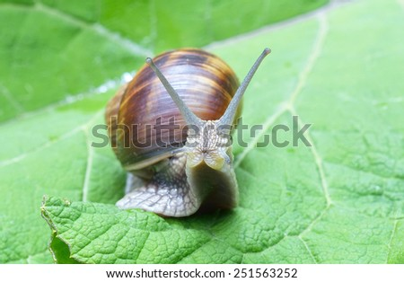 Snail on a leaf - stock photo