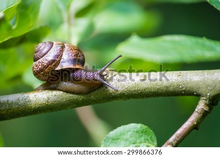 snail on a tree branch with green leaves