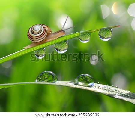 Snail on dewy grass close up - stock photo