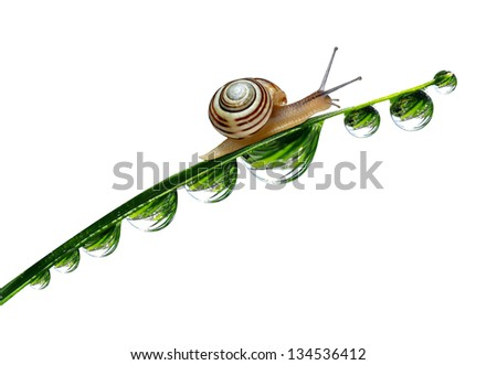 Snail on dewy grass isolated