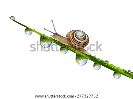 Snail on grass with dew drops close up isolated on white background