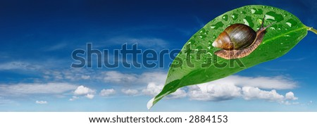 Snail on leaf and blue sky background - stock photo
