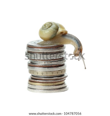 snail on money - stock photo