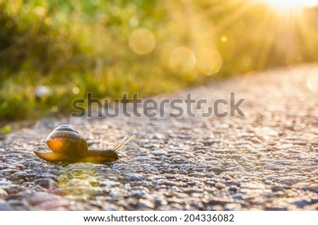 snail on road during sunset - stock photo