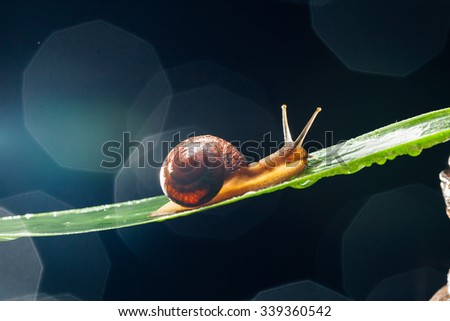 snail on the leaf against dark bokeh background - stock photo