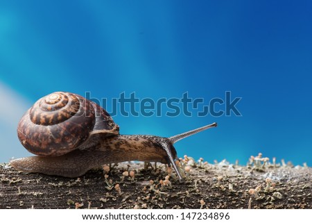snail on the move - stock photo