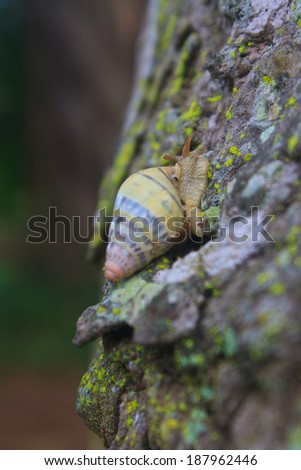 snail on the trunk tree in forest