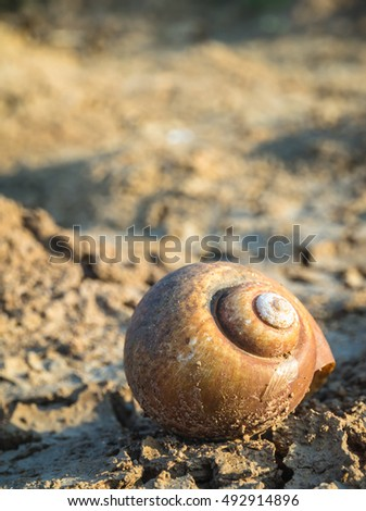 snail shell on cracked ground