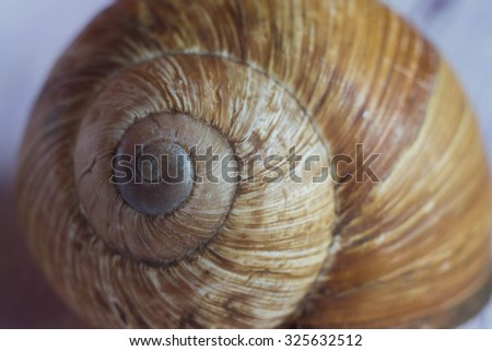 Snail shell Twirl. - stock photo