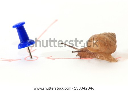 Snail towards the goal very difficult. - stock photo