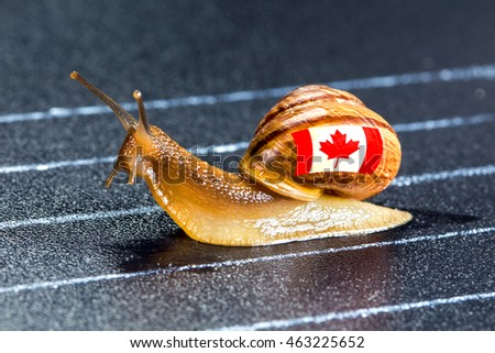 Snail under Canadian flag on sports track moves to finish line