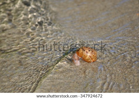 Snail vs. Water Leak - a sudden rush of water nearly sweeps this snail away, but it escapes to crawl another day.