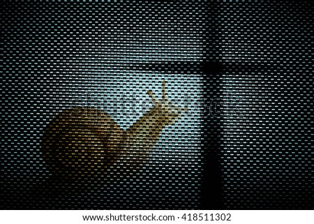 Snail with cross in dark,Faith belief and hope concept - stock photo