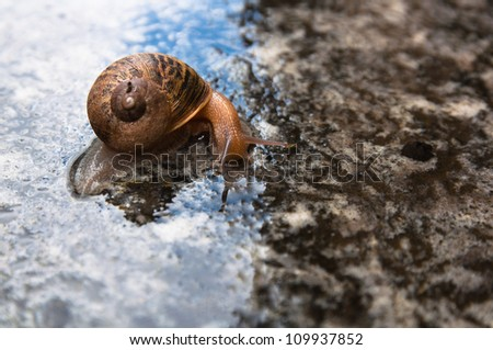 Snail with horns on the right side - stock photo