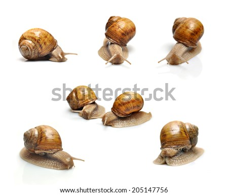 Snails collage - stock photo