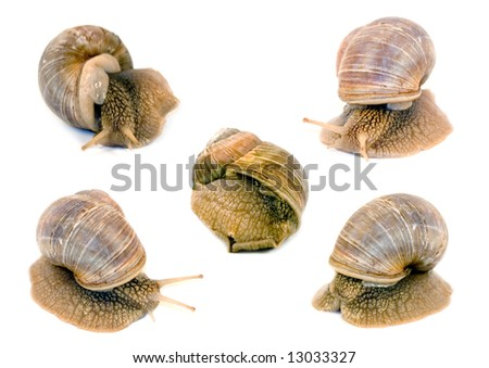 Snails isolated on white background