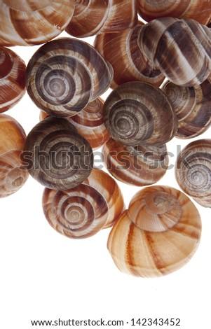 Snails isolated on white background - stock photo