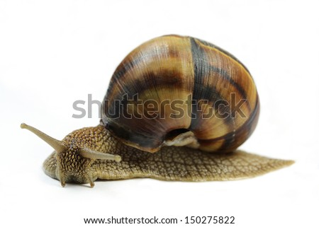 Snails on a white background