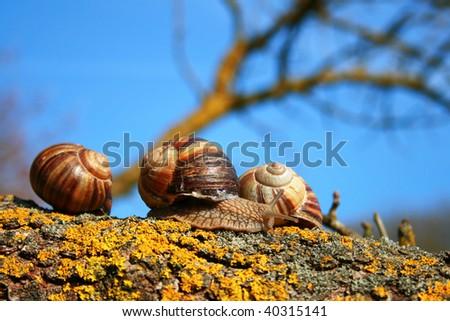 snails on tree - stock photo