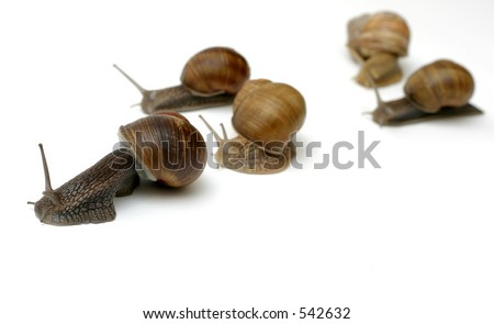 Snails racing toward the finish line (fresh salad) :) - stock photo