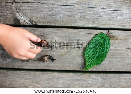 Snails racing towards green leaf while kids helping them - stock photo