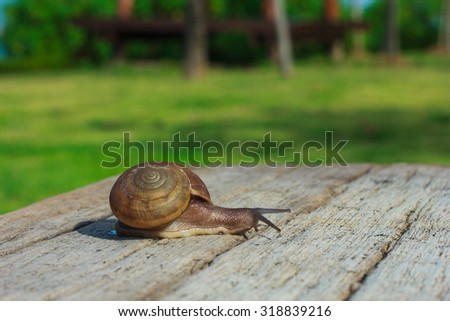 Snails, reptiles, animals, nature.