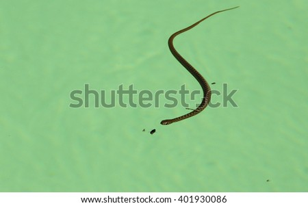 Snake attacks bug in the hotel swimming pool - stock photo