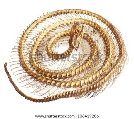 snake bone on white background - stock photo