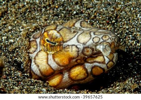 snake eel - stock photo